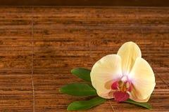 λουλούδι όπως τη σκηνή zen Στοκ Φωτογραφίες