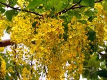 λουλούδι 02 κίτρινο Στοκ Εικόνες