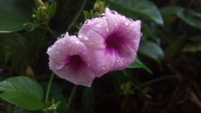 Λουλούδι Στοκ Φωτογραφία