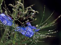 Λουλούδι 2 Στοκ φωτογραφία με δικαίωμα ελεύθερης χρήσης