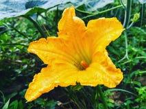 Λουλούδι στοκ φωτογραφία με δικαίωμα ελεύθερης χρήσης