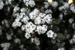 Λουλούδι 002 Στοκ Εικόνες