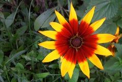λουλούδι Στοκ Εικόνα