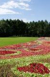 λουλούδι 2 πεδίων Στοκ φωτογραφία με δικαίωμα ελεύθερης χρήσης