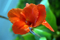 λουλούδι 2 τροπικό Στοκ φωτογραφία με δικαίωμα ελεύθερης χρήσης