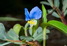 λουλούδι 6 χειλικό Στοκ φωτογραφία με δικαίωμα ελεύθερης χρήσης
