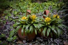 Λουλούδι Bromelia Στοκ φωτογραφία με δικαίωμα ελεύθερης χρήσης