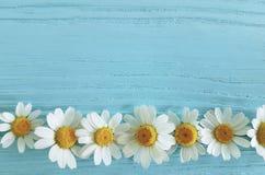 Λουλούδι Chamomile σε ένα μπλε υπόβαθρο στοκ φωτογραφία με δικαίωμα ελεύθερης χρήσης