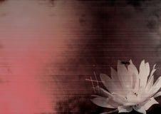 λουλούδι grunge Στοκ Φωτογραφίες