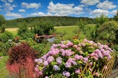 Λουλούδι Hydrangea στον κήπο Στοκ Φωτογραφία