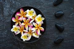 Λουλούδι Plumeria που επιπλέει στην κεραμική πέτρα κύπελλων και zen βασαλτών μέσα Στοκ εικόνα με δικαίωμα ελεύθερης χρήσης