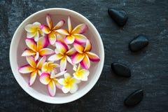 Λουλούδι Plumeria που επιπλέει στις κεραμικές πέτρες ι κύπελλων και zen βασαλτών Στοκ Εικόνες