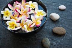 Λουλούδι Plumeria που επιπλέει στο κεραμικές κύπελλο και zen τις πέτρες στο tropi Στοκ φωτογραφία με δικαίωμα ελεύθερης χρήσης