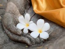 Λουλούδι Plumeria στο άγαλμα του Βούδα Στοκ φωτογραφίες με δικαίωμα ελεύθερης χρήσης