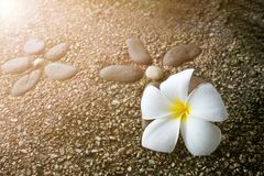 Λουλούδι Plumeria στο πάτωμα Στοκ Εικόνες