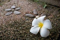 Λουλούδι Plumeria στο πάτωμα Στοκ Φωτογραφία