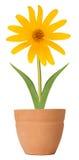 λουλούδι Susan στοκ εικόνες