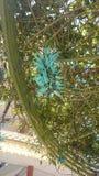 λουλούδι tiger& x27 πόδια του s Στοκ εικόνες με δικαίωμα ελεύθερης χρήσης