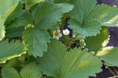 Λουλούδι Tne Στοκ εικόνα με δικαίωμα ελεύθερης χρήσης