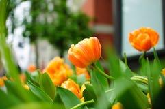 λουλούδια αστικά Στοκ εικόνες με δικαίωμα ελεύθερης χρήσης