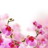 Λουλούδια, θερινή ανασκόπηση ανθών με orchid Στοκ Εικόνες