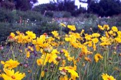 λουλούδια κίτρινα Στοκ Φωτογραφία