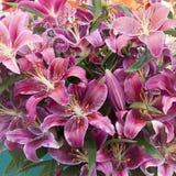 Λουλούδια κρίνων Στοκ εικόνα με δικαίωμα ελεύθερης χρήσης