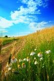 λουλούδια πεδίων Στοκ φωτογραφίες με δικαίωμα ελεύθερης χρήσης