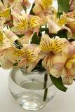 λουλούδια ρύθμισης Στοκ Εικόνες