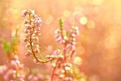 Λουλούδια φθινοπώρου Στοκ Εικόνες