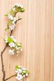 Λουλούδι άνοιξη Στοκ Εικόνες