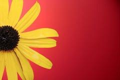 λουλούδι κίτρινο Στοκ φωτογραφίες με δικαίωμα ελεύθερης χρήσης