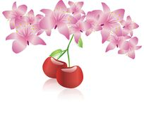 λουλούδι κερασιών ανθών Στοκ Εικόνα