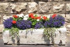 λουλούδι κιβωτίων Στοκ εικόνα με δικαίωμα ελεύθερης χρήσης