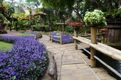 λουλούδι Ταϊλάνδη Στοκ εικόνα με δικαίωμα ελεύθερης χρήσης