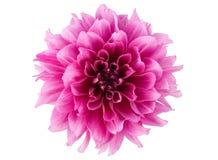 λουλούδι peony Στοκ φωτογραφίες με δικαίωμα ελεύθερης χρήσης
