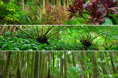 Λουρίδες πανοράματος συνδυασμού ποικιλίας τροπικών δασών στοκ φωτογραφία με δικαίωμα ελεύθερης χρήσης