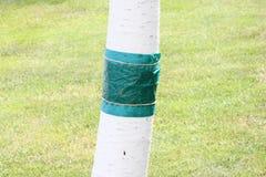 Λουρίδα κόλλας Στοκ φωτογραφία με δικαίωμα ελεύθερης χρήσης