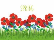 Λουρίδα της χλόης, της χλόης και των λουλουδιών διανυσματική απεικόνιση