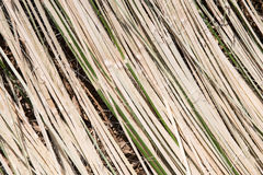 Λουρίδες μπαμπού Στοκ Εικόνα