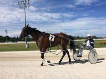 Λουρί που συναγωνίζεται σε Αλεξάνδρα Park Raceway στο Ώκλαντ Νέα Ζηλανδία στοκ εικόνες