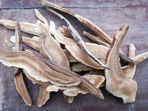 Λουστραρισμένο με λάκκα ξηρό ξηρό μανιτάρι lingzhi Στοκ φωτογραφία με δικαίωμα ελεύθερης χρήσης