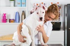 Λουτρό ενός σκυλιού Dogo Argentino Στοκ Εικόνες