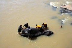 Λουτρό ελεφάντων Στοκ Φωτογραφίες