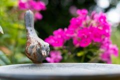 Λουτρό πουλιών με τα λουλούδια στοκ φωτογραφίες