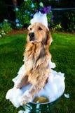 Λουτρό σκυλιών στοκ φωτογραφίες