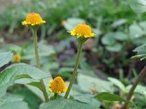 Λουλουδιού Στοκ Εικόνα