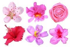 Λουλουδιών σύνολο που απομονώνεται μεγάλο Στοκ Εικόνα