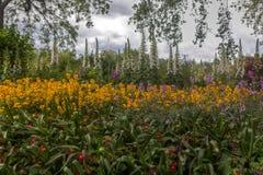 Λουλούδια Άγιος James& x27 πάρκο του s, Λονδίνο, Αγγλία, UK Στοκ εικόνα με δικαίωμα ελεύθερης χρήσης