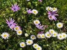 Λουλούδια άνοιξης στον τομέα Στοκ εικόνα με δικαίωμα ελεύθερης χρήσης